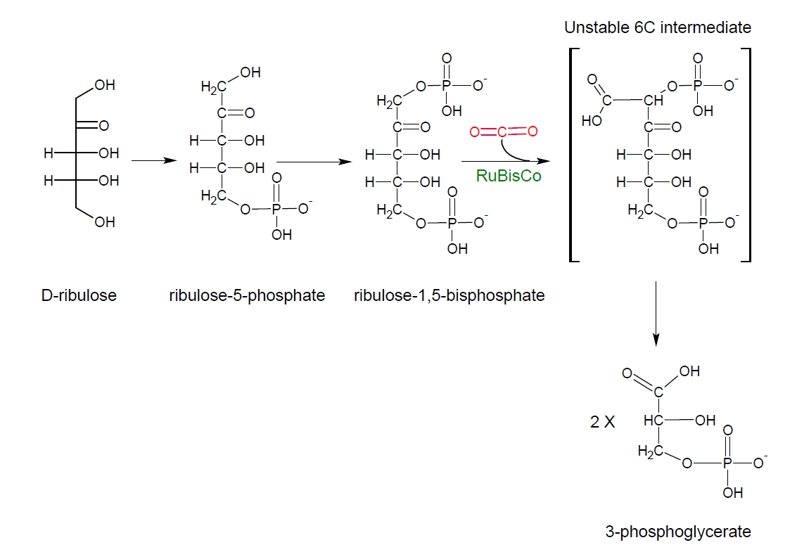 how is galp used to synthesise cellulose Top keywords for synthesises (530 found) want more of this how is galp used to synthesise cellulose.