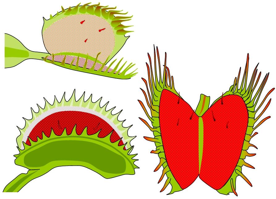 Carnivorousplants venus flytrap ccuart Choice Image