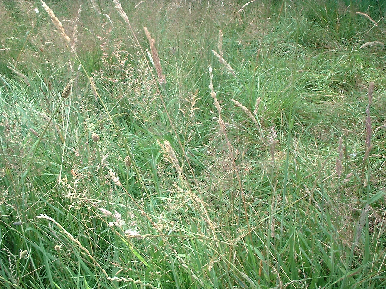 Meadow flowers for Grass flower