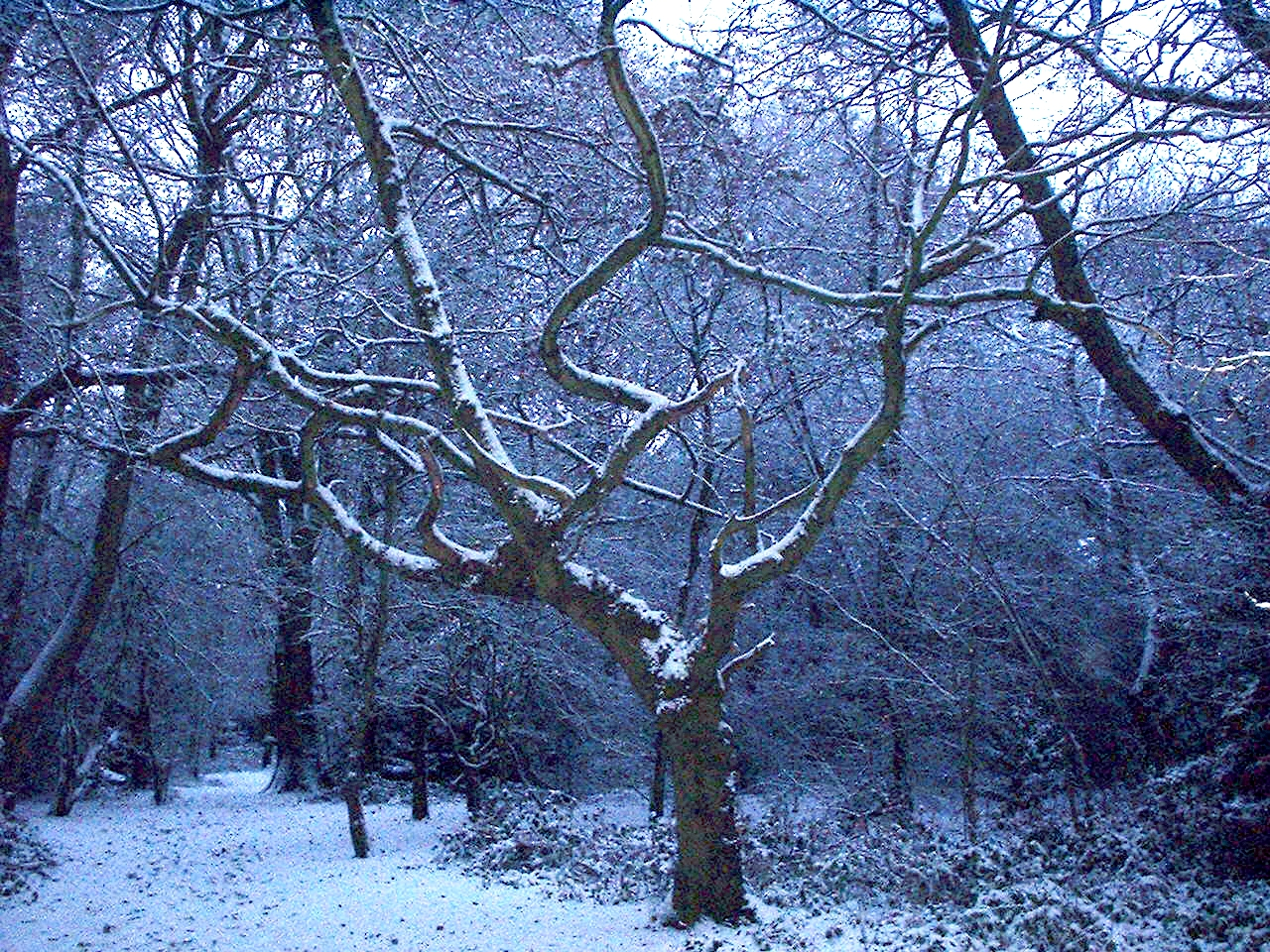 The Winter Woodland