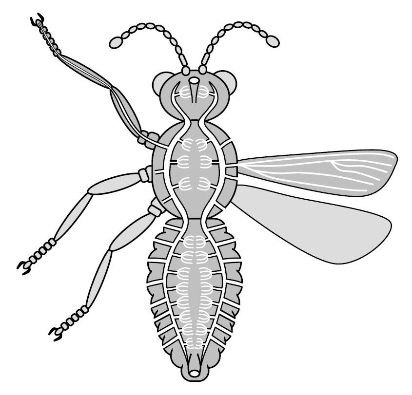 Honey Bee Diagram By Crazyhobo Deviantart Com On Manual Guide