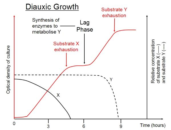 bacteria growth and glucose percentages Discussion there is growth on both the healthy and diseased agar plates for both bacteria and fungi for the healthy fungal plate there is a single type of growth which suggests that it is a natural non-pathogenic fungus that grows on plants.