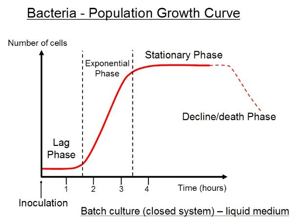 microorganisms growth Change in bacterial growth patterns is a direct result of change in the bacteria's environment since conditions can be easily controlled in a lab, it is possible to identify specific qualities of the bacteria and their growth media that affect growth patterns.