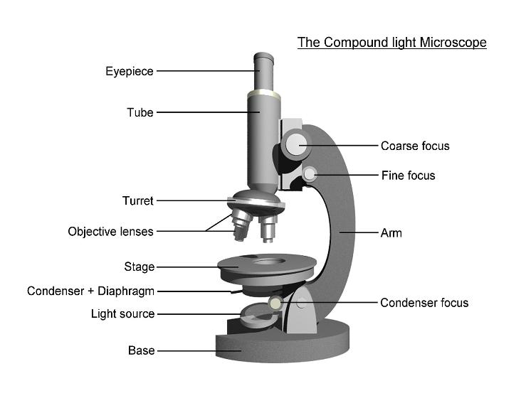 Compound light microscope (labelled)