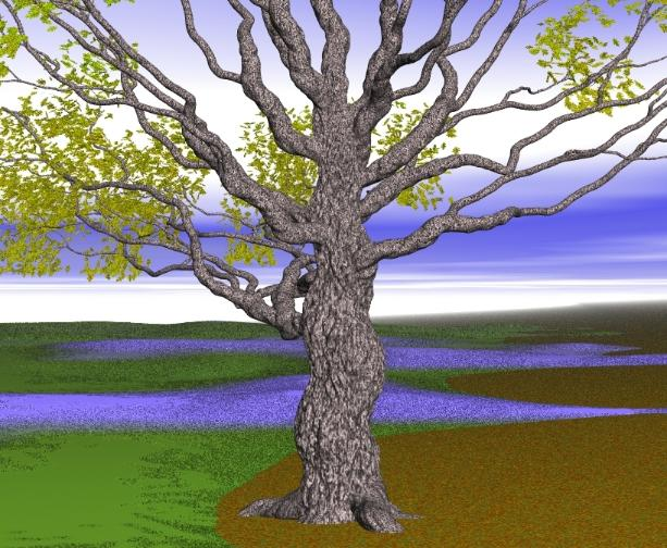 Pov-ray model of oak tree