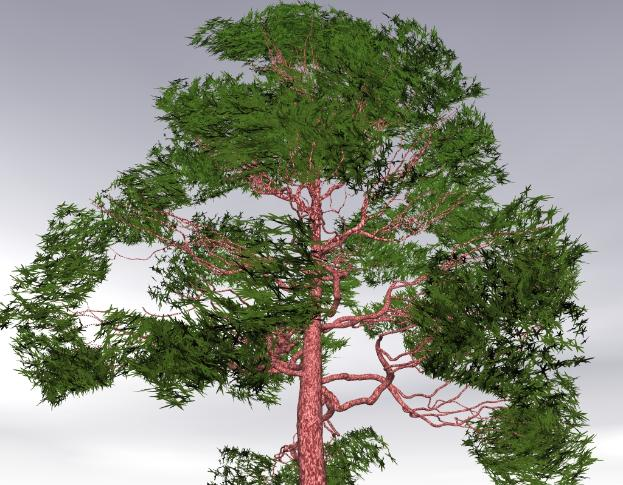 Pov-ray model of a pine tree