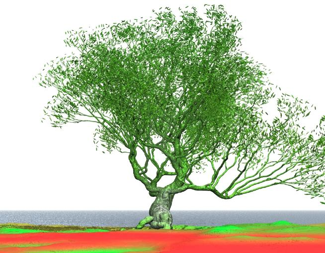 Pov-ray model of willow tree