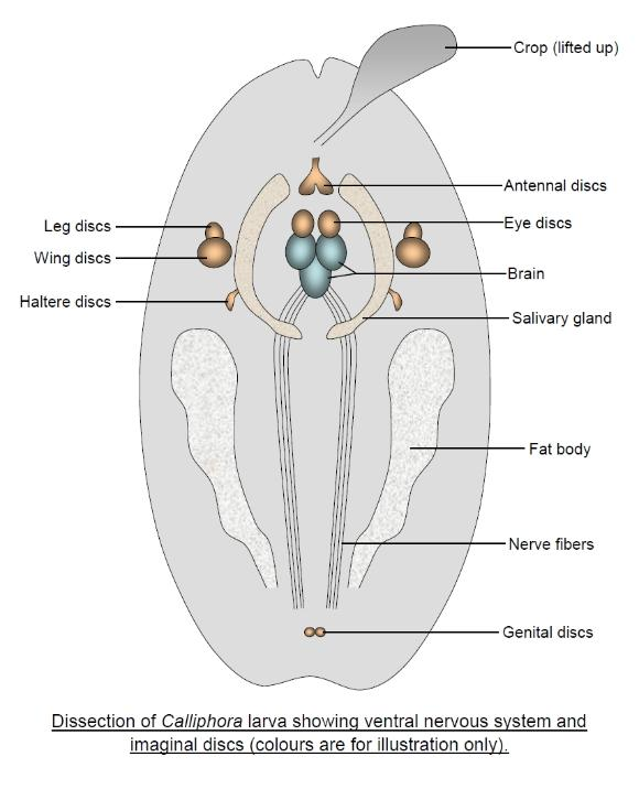 blowfy dissection diagram
