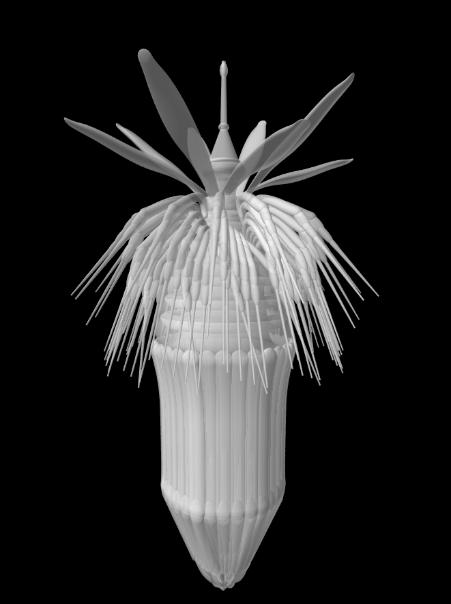 3D Pov-Ray model of a loriciferan