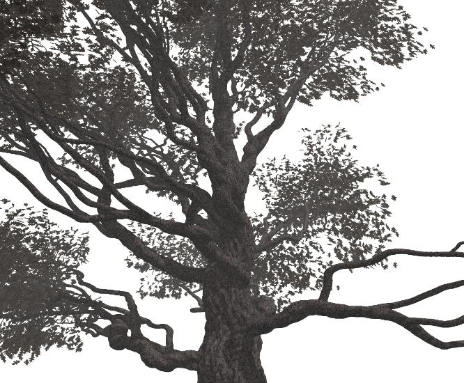 Pov-Ray model of an oak tree with fog