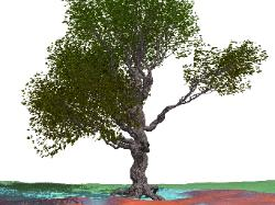 pov-ray model of an oak tree