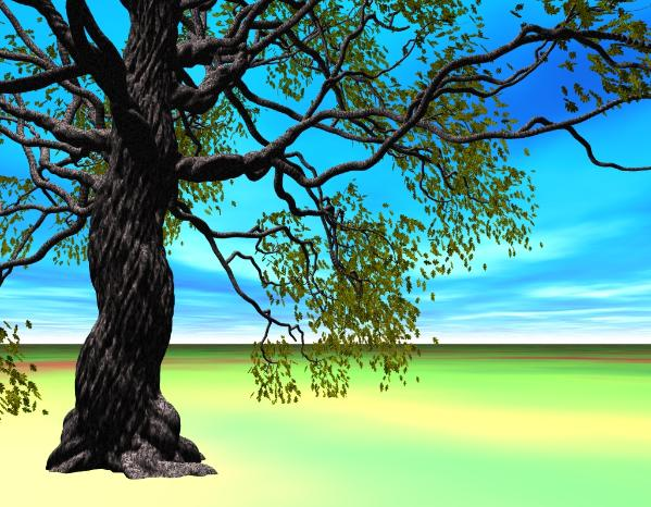 Oak tree: Pov-Ray model