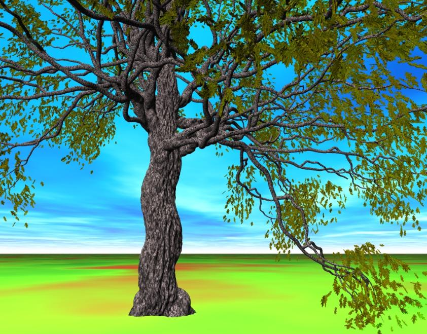 oak tree, Pov-Ray model