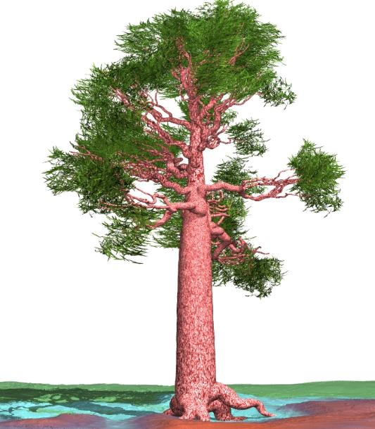 Pov-ray model of a giant sequoia